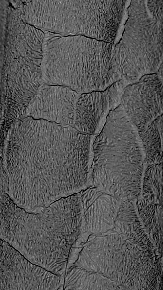 Сірий (зміїна шкіра)