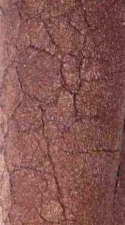 Коричневый (змеиная кожа)